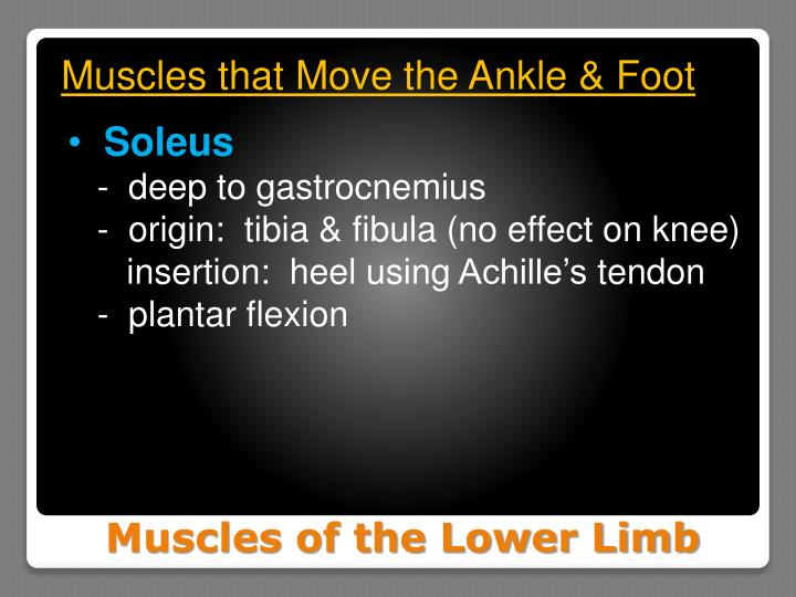 Muscles that Move the Ankle & Foot