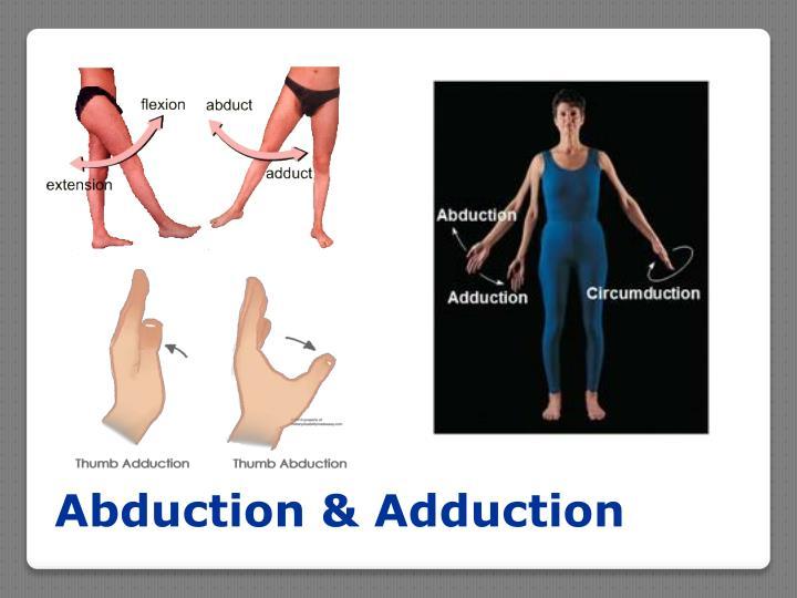 Abduction & Adduction