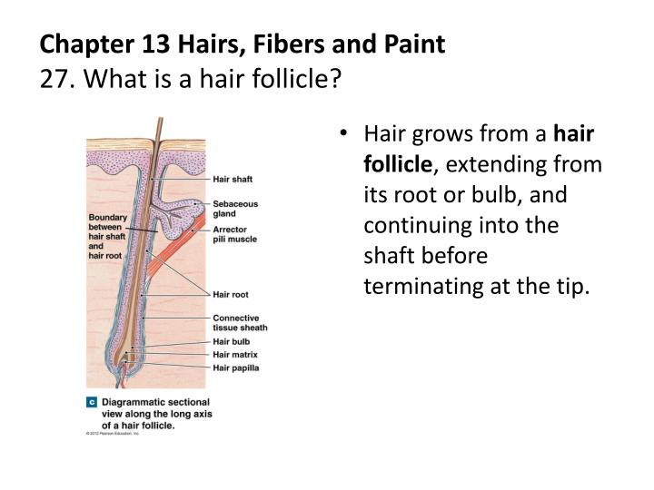 Chapter 13 Hairs, Fibers and Paint