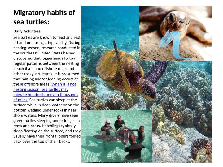 Migratory habits of sea turtles: