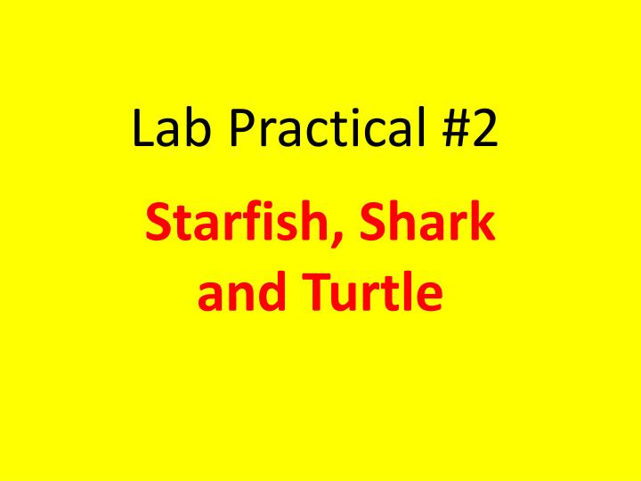 PPT - Lab Practical #2 PowerPoint Presentation - ID:2181402
