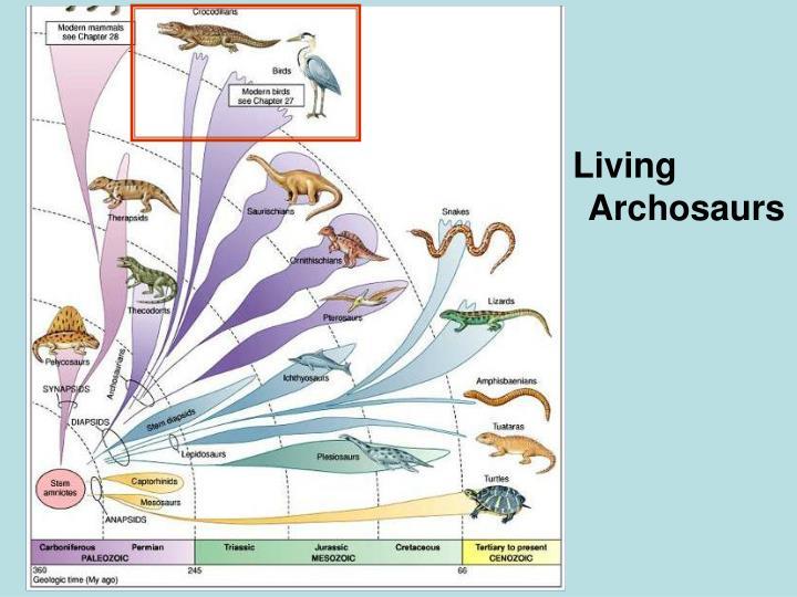 Living Archosaurs
