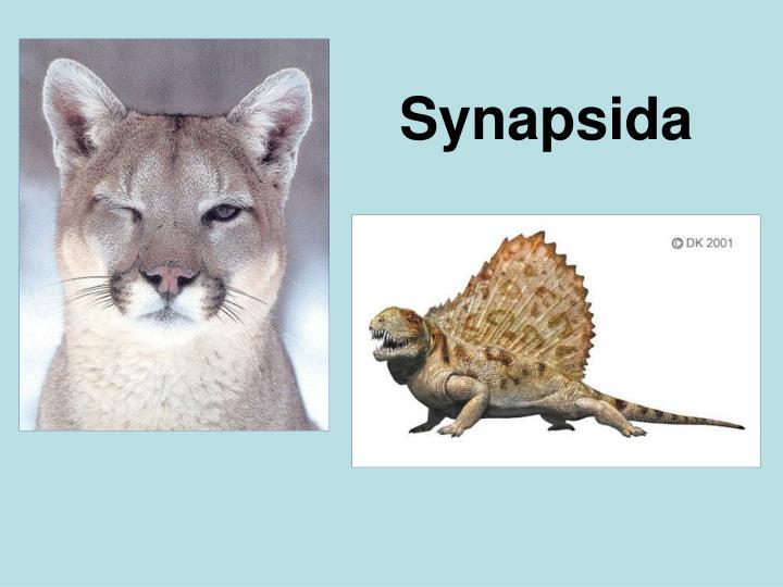 Synapsida