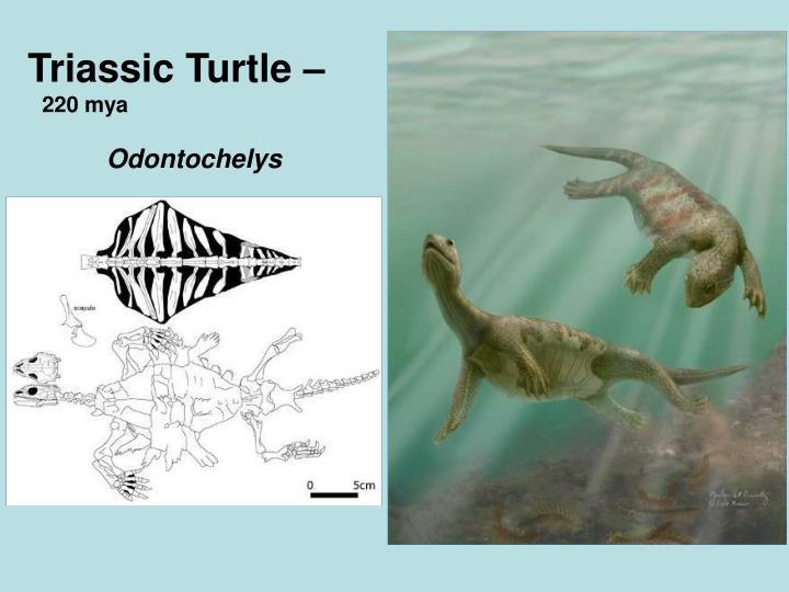 Triassic Turtle –