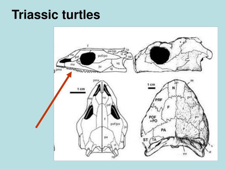 Triassic turtles