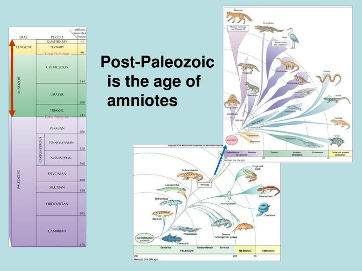 Post-Paleozoic is the age of amniotes
