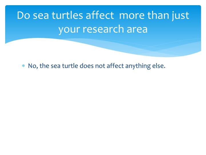Do sea turtles affect  more than just your research area
