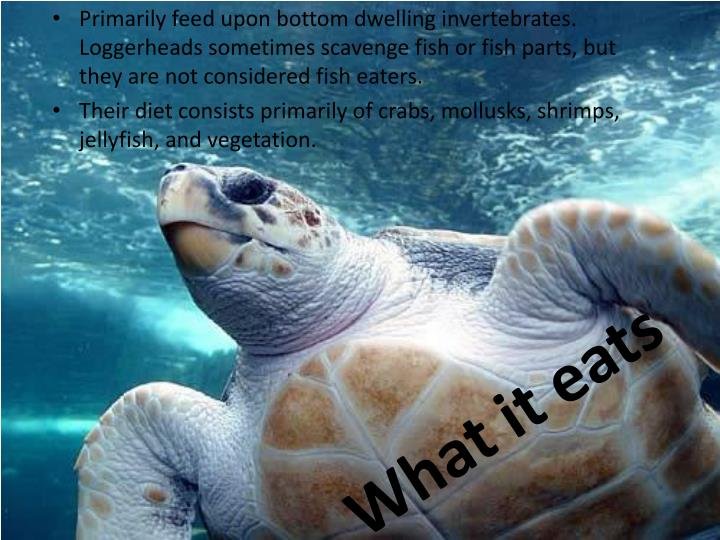 What it eats