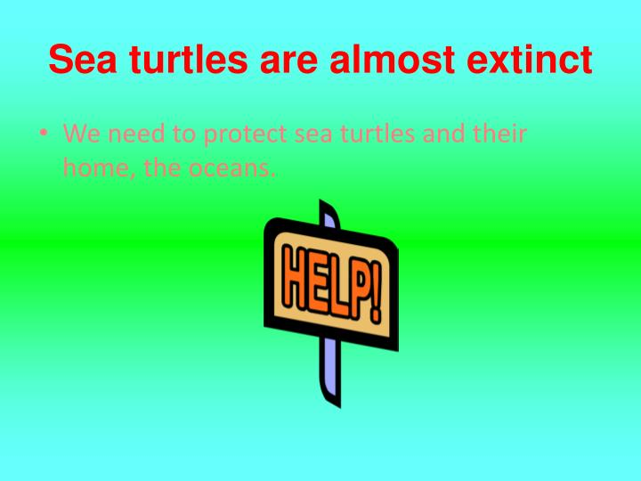 Sea turtles are almost extinct