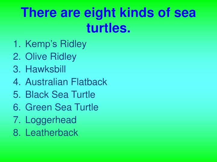 There are eight kinds of sea turtles.
