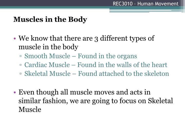 Rec3010 human movement