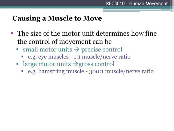 REC3010 – Human Movement