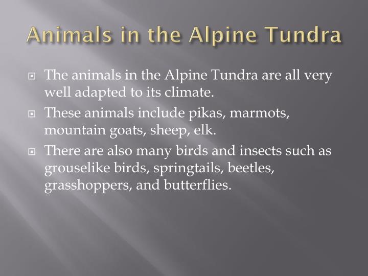 Animals in the Alpine Tundra