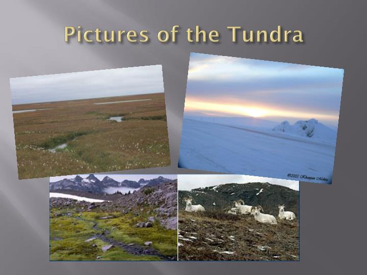 Pictures of the Tundra