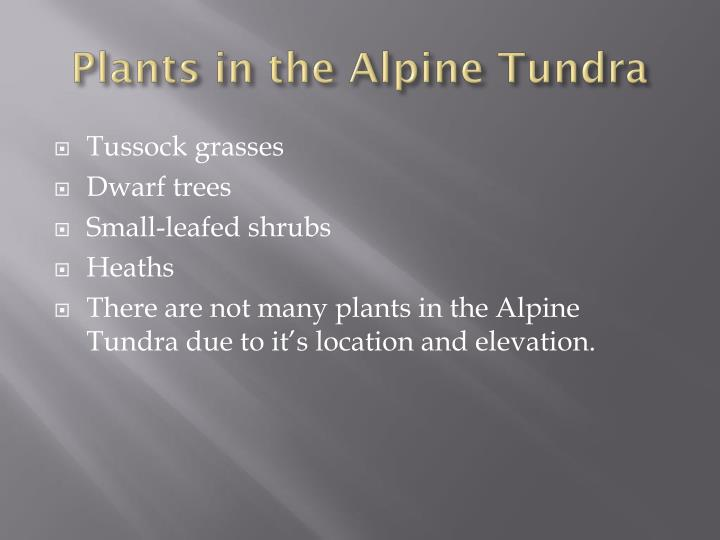 Plants in the Alpine Tundra