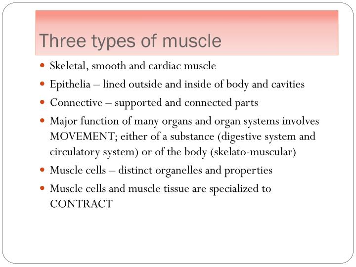 PPT - Ch. 4 Connective Tissue Muscle Tissue PowerPoint Presentation ...