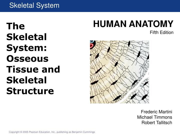 PPT The Skeletal System Osseous Tissue And Skeletal