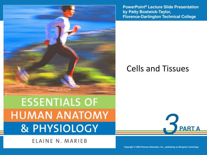 cells and tissues n.