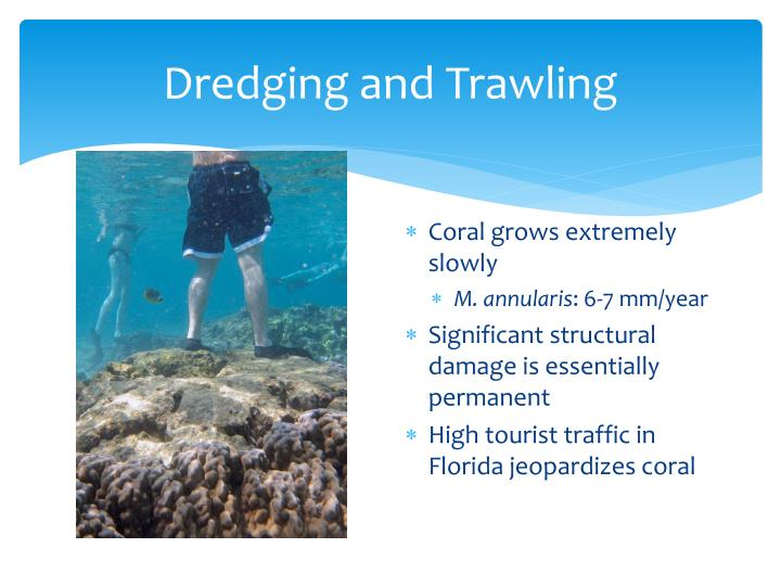 Dredging and Trawling