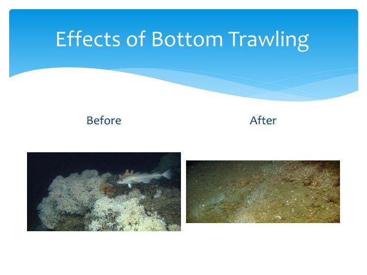 Effects of Bottom Trawling