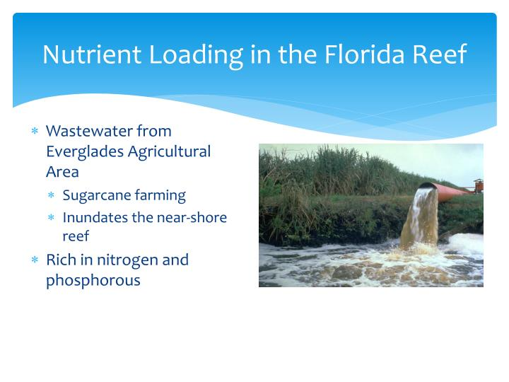 Nutrient Loading in the Florida Reef