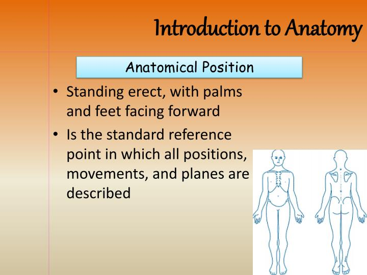Ppt Anatomical Position Powerpoint Presentation Id2185193