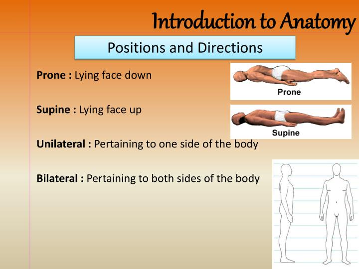 PPT - Anatomical Position PowerPoint Presentation - ID:2185193