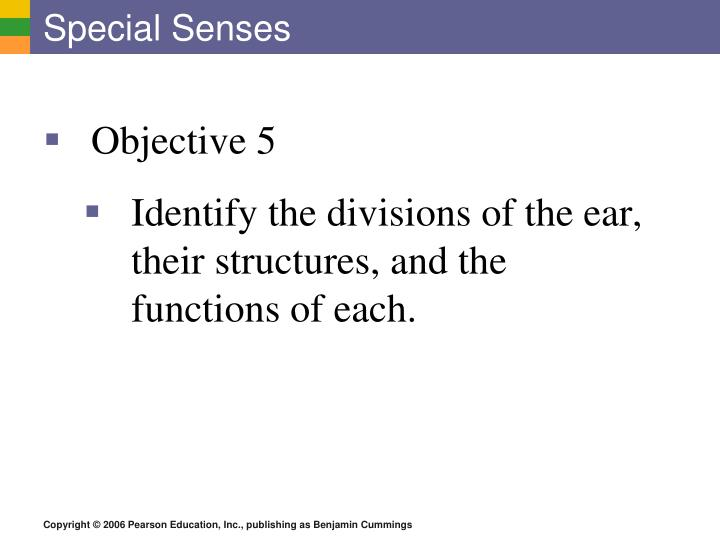 PPT - Special Senses PowerPoint Presentation - ID:2185200
