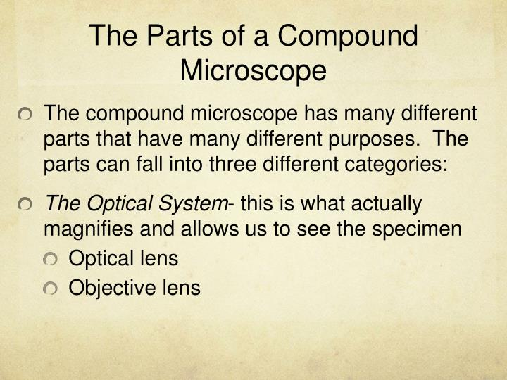 The Parts of a Compound Microscope