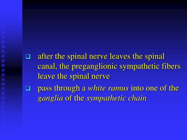 sympathetic fibers leave the spinal cord in the