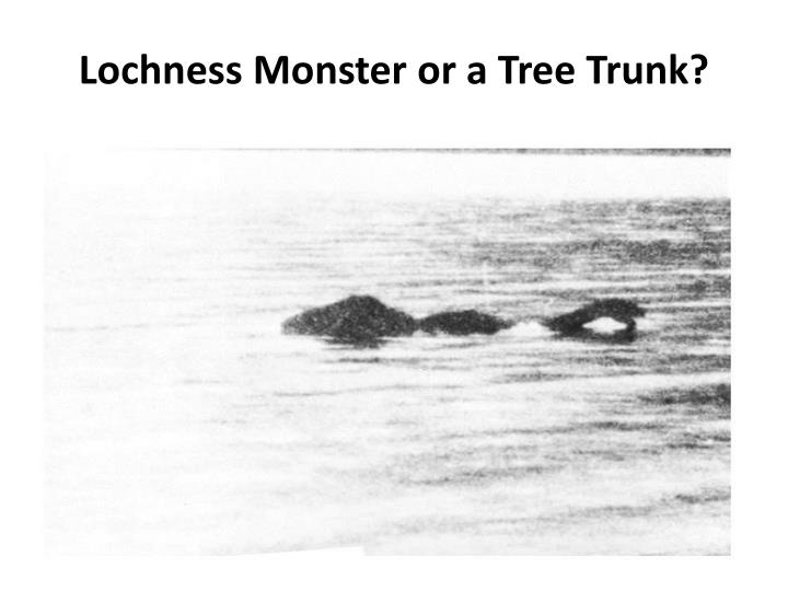 Lochness Monster or a Tree Trunk?