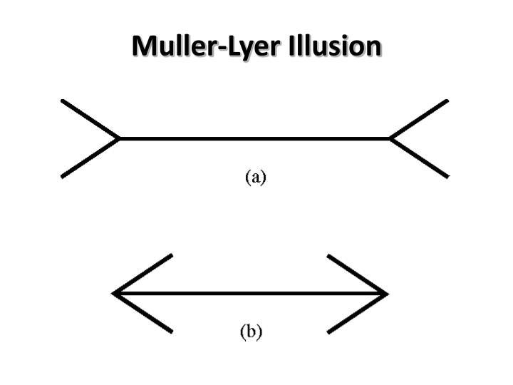 Muller-