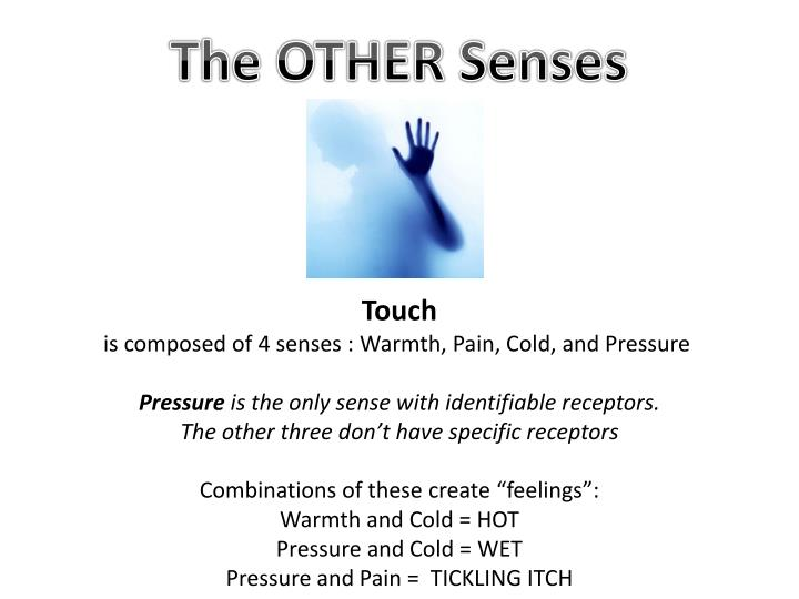 The OTHER Senses
