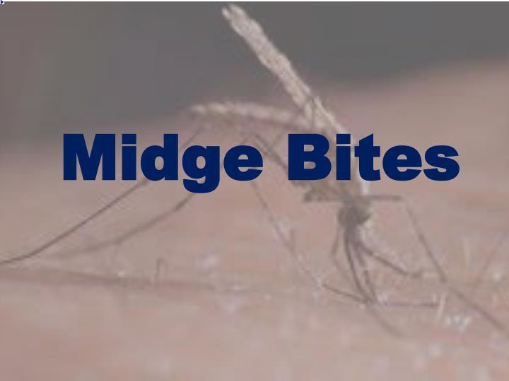 Midge Bites