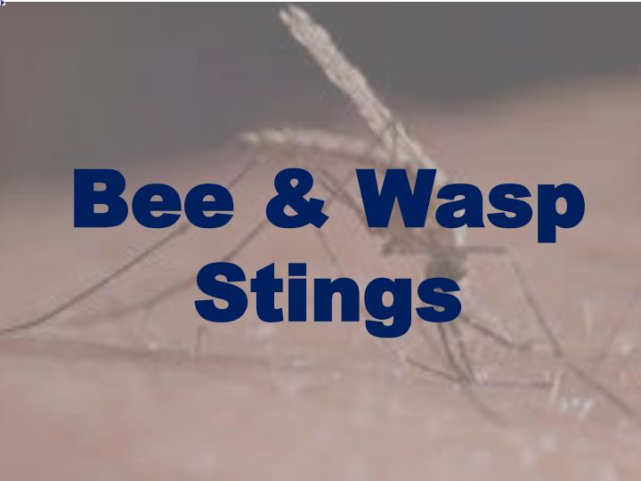 Bee & Wasp Stings