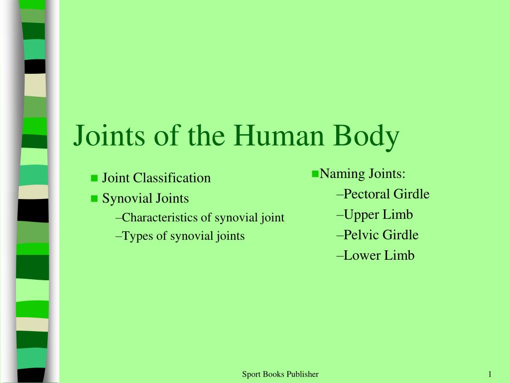Ppt Joints Of The Human Body Powerpoint Presentation Id2188340