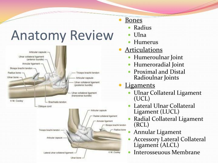 Ppt Elbow And Forearm Evaluation Powerpoint Presentation Id2188518
