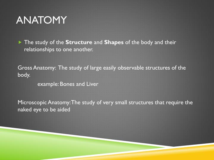 PPT - Chapter 1: the Human Body PowerPoint Presentation - ID:2188853