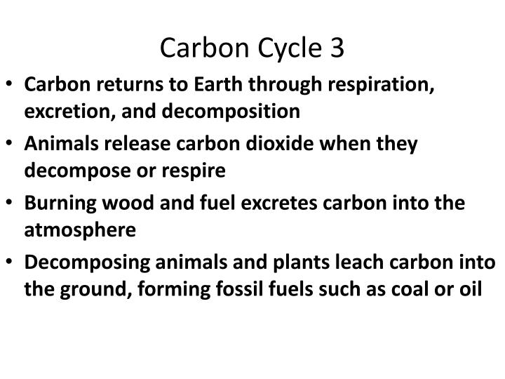 Carbon Cycle 3
