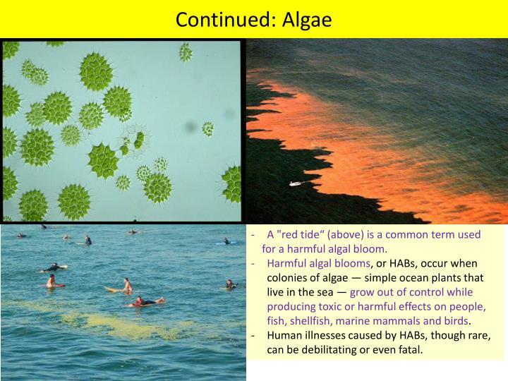 PPT - Types of Algae PowerPoint Presentation - ID:2189533