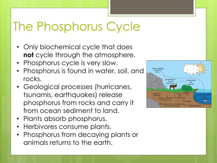 The Phosphorus Cycle