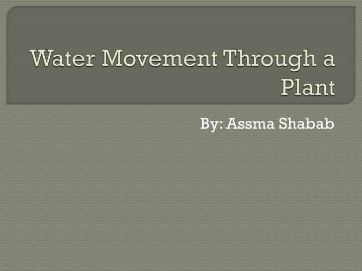water movement through a plant n.