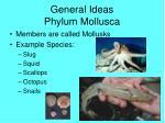 general ideas phylum mollusca