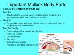 important mollusk body parts