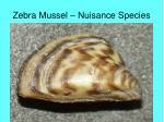 zebra mussel nuisance species