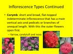 inflorescence types continued2