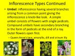 inflorescence types continued3