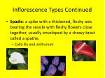 inflorescence types continued4