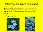 inflorescence types continued8