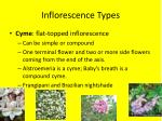 inflorescence types1